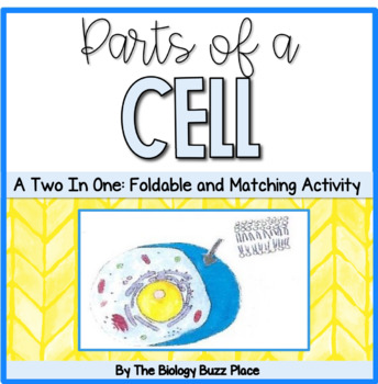 Parts of the Cell Study Guide AND Matching Activity