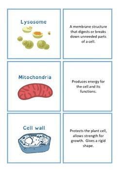 Cell organelle function matching cards