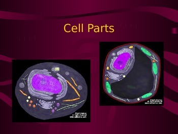 Cell Organelles