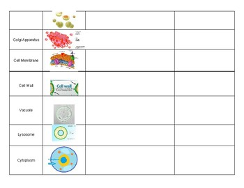 Cell Organelles Blank Notes Chart
