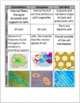 Cell Organelles Card Sort