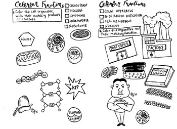 Cell Organelles Coloring sheet