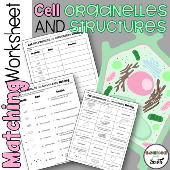 Cell Organelles Cut and Paste Activity for Middle and High School Students