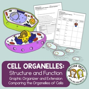 Cell Organelles Structure & Function Graphic Organizer