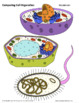 Cell Organelle Structure & Function - Comparing Plant, Animal, & Bacteria Cells