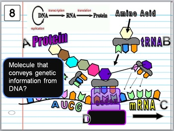Cell Organelles Quiz Game
