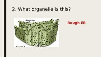 Cell Organelles PowerPoint Review