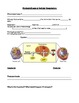 Cell Organelles & Respiration Notes