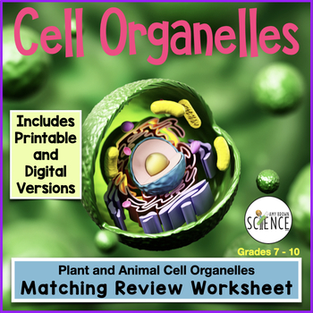 Cell Organelle Matching Worksheets & Teaching Resources | TpT