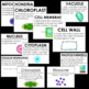 Cell Organelles- Vocabulary Cards- Plant and Animal