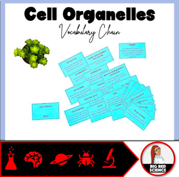 Cell Organelles Vocabulary Chain