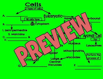 Cell Organelles Vocabulary Concept Map/Flow Chart