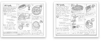 Cell Organelles and Biomolecules coloring sheet
