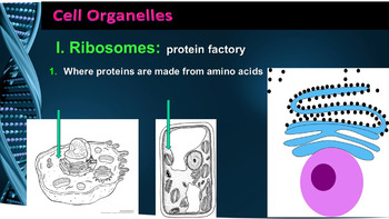 Cell Organelles and thier Functions: A Lesson a Day PPT Notes (Gr 7-12)
