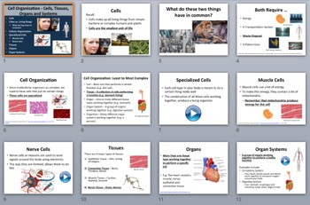 Cell Organization - Cells, Tissues, Organs, and Systems - PowerPoint Lesson