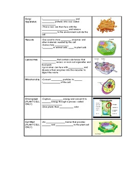 Cell PPT Notes- Handout