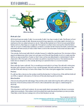 Cell Parts - STEM Lesson Plan