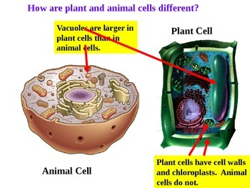 Cell Parts and Analogies