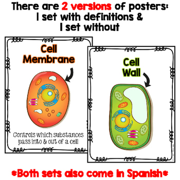 Cell Posters & Word Wall