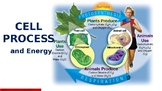 Cell Process and Energy PowerPoint