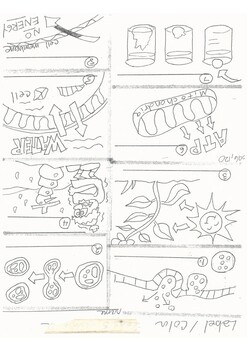 Cell Process coloring worksheet