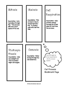 Cell Process for Middle School:  Interactive Notebook Activity