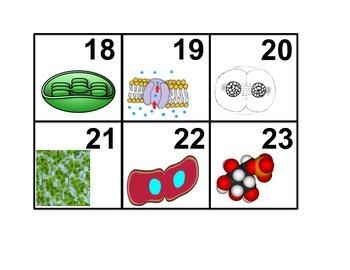 Cell Processes Calendar Cards