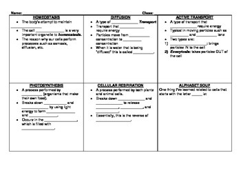 Cell Processes Graphic Organizer