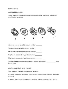 Cell Processes: Meiosis and Mitosis Test