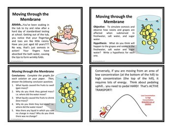 Osmosis and Diffusion - PowerPoint and Handouts