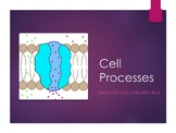 Cell Processes PowerPoint Teaching Pack