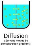 Cell Processes Unit Bundle