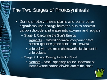 Cell Processes and Energy Power Point Presentation