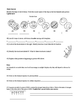26 Cell Processes And Energy Photosynthesis Worksheet ...