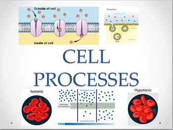 Cell Transport Processes, Osmosis and Homeostasis Power Point