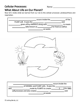 Photosynthesis and Respiration - PowerPoint and Handouts