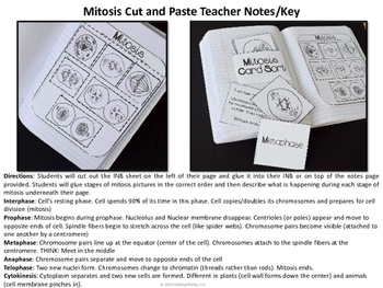Mitosis Science Interactive Notebook By Getting Nerdy With Mel And