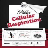Cell Respiration - Bioenergetics Foldable