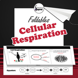 Cell Respiration - Bioenergetics Foldable