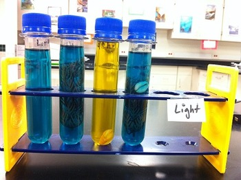 Cell Respiration Lab and Demo