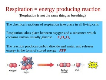Cell Respiration Powerpoint