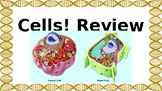 Cell Review Flashcards