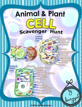 Cell Scavenger Hunt - {Animal /Plant Cell}