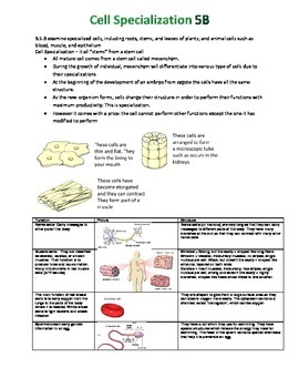 Cell Specialization Notes 5B