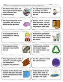 Cut-n-Paste Vocabulary: Cell Structure