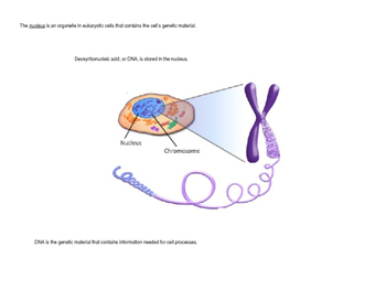 Cell Structure (Organelles)