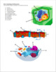 Cell Structure and Function Exam
