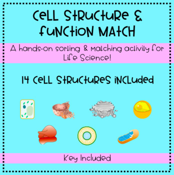 Cell Structure and Function Matching Activity & Interactive Notebook