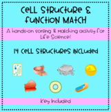 Cell Structure and Function Matching Activity & Interactiv