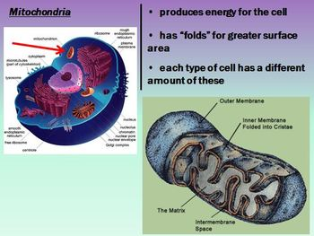 Cell Structure and Function Notes Powerpoint Presentation Package